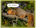 Funny Squirrel Sleeping Refrigerator Tool Box File Cabinet Magnet
