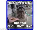Funny Raccoon Begging Food Refrigerator Tool Box Magnet
