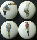 Cabinet Knobs W/ Parrot Macaw Cockatoo Exotic Tropical Birds