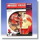 4D Human Anatomy Head Model 3D CutAway Puzzle