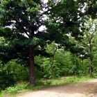 27 ACRE PARCEL WITH ELECTRIC IN MISSOURI OZARKS GREAT RV OR BUILDING SITE
