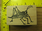 Rubber Stamp Grasshopper by ERA Bug Insect Nature Stampinsisters 26