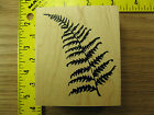 Rubber Stamp Fern Frond by Northwoods Foliage Nature Stampinsisters 641