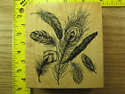 Rubber Stamp PSX Bird Feathers Background K2183 Nature Stampinsisters 2070