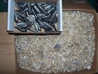 1 pound lbs of fossil Moroccan shark teeth and one orthoceras fossil per lot