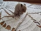 HTF Vintage Taxidermy Real Fur Mouse w Corn Germany Label LIFELIKE Long Tail