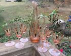 Vintage Mid Century Modern 7 pc. Peach Glass Wine Decanter Set Made In Hungary