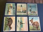 1910 HASSAN CIGARETTES VARIOUS ISSUES LOT X 6
