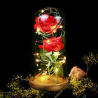 Red Rose Lights Decorations Beauty Enchanted Preserved Red Fresh Rose Glass Cove