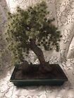 Bonsai Tree With Green Painted Container Very Pretty Looks Real