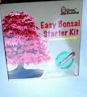 Bonsai Tree Starter Kit Beginner Seed Set 4 Indoor Outdoor Seeds Pots Soil NEW