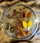 5 Real Butterflies Moths Display Taxidermy Double Glass Round Shadow Box Frame