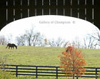 The Bluegrass Collection The Covered Bridge 1Photo 8x10