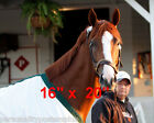 Preakness Triple Crown Horse Racing California Chrome Photo 4 Poster 16 x 20
