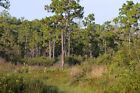 FLORIDA REAL ESTATE 2 LOTS IN OSCEOLA COUNTY NO RESERVE
