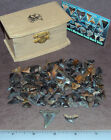 Shark Tooth Pirate Treasure Chest 1252 Mako Tiger Shark 100+ teeth