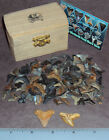 Shark Tooth Pirate Treasure Chest 1058 Megalodon Tiger Shark 100+ teeth