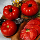 BLACK MOUNTAIN PINK TOMATO ( 300 seeds )