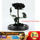 Forever Black Rose Flower In Glass Festive Preserved Immortal Fresh Unique Gift