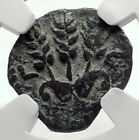 Herod AGRIPPA I JERUSALEM Biblical Claudius Time Ancient Greek Coin NGC i70886