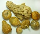 LOT of 8 Dried Gourds Primitive Grungy Natural Farmhouse Bowl Filler Rustic Prim