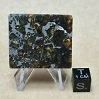 Admire Pallasite 1632g Etched Part Slice By Meteorite Men Steve