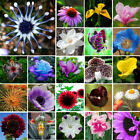 2-2000PCS Home Garden Rare Flower Seeds Easy to Plant Outdoor Plants Decor Seed
