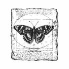 Hampton Arts Cam  Chloe Wood Mounted Rubber Stamp Butterfly Collage