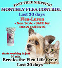 1 Year Supply MONTHLY Flea Control For DOGS and CATS 2 30Lbs165 Mg 12 Capsules