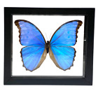 Real Butterfly Blue Morpho Didius Lepidoptera Taxidermy Frame with Double Sided