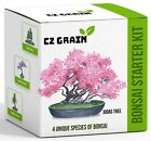 Bonsai Tree Kit Grow 4 Types of Bonsai Tree from Seed Highly Desired Species