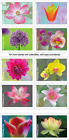 USPS 'Garden Beauty' Forever Postage Stamps, Full Booklet of 20 (Free Shipping)