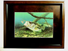 BASS FISH PICTURE FISHING UNHAPPY CAMPER RANDY MCGOVERN MATTED FRAMED 12X16