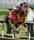2008 BIG BROWN PREAKNESS WINNER HORSE RACING 8X10 PHOTO