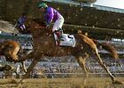 CALIFORNIA CHROME 2014 146TH BELMONT STAKES HORSE RACE RACING 8X10 PHOTO 2