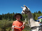 5 ACRE COLORADO LAND LLAMA TREK SAN LUIS VALLEY NO INTEREST YURT