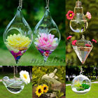 Hanging Glass Plants Flowers Vase Hydroponic Container Home Party Wedding Decor