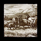 Rare Antique Tile Mintons China Works Animals on the Farm Sheep by William Wise