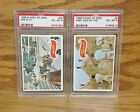 Lot of 2 1969 Topps Planet of the Apes 5 35 PSA 6 EX-MT Ape City First Sign of