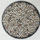 Pumice Bonsai Cactus Soil You Pick Size  Also Great For Alpines