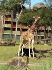 Disney Vacation Club DVC 50 points rental Buy More Less Points