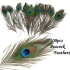 Lots 100 Wholesale Natural Real Peacock Tail Eye Feathers 10 12Inches Ornament