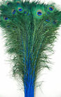 Dyed Peacock Feathers 30-45 Various Colors Halloweencostumebridalburlesque