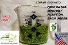 1 cup duckweed plants Turtle food Organic no chemicals tank raised hydroponics