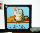 Victorian Glass Magic Lantern Slide humour The Flower of the family