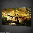 JAPANESE BONSAI MAPLE YELLOW TREE WALL ART CANVAS PRINT PICTURE READY TO HANG