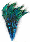 100 Pcs DYED PEACOCK SWORDS TURQUOISE 20 25 Feathers Costume Hats Bridal Pads