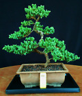 Juniper bonsai tree Japanese procumbens na na Soil Plant Pot A5