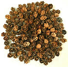 300 HEMLOCK PINE CONES Mini Small Tiny Dime Size or Smaller Crafters Wreaths