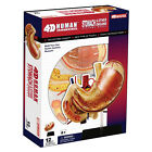 STOMACH  Other ORGANS 4D ANATOMY MODEL PUZZLE Kit 26065 TEDCO SCIENCE TOYS